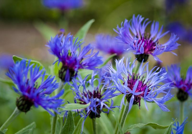10 Lovely Cottage Garden Flower Ideas - Rilane